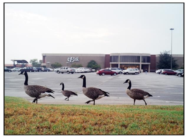 geese-mall-07-01web.jpg