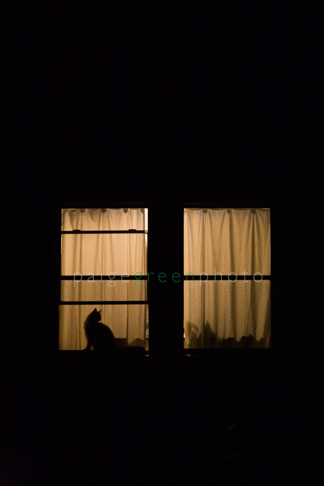 lou-window_MG_3034