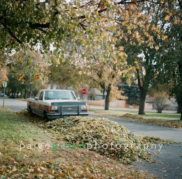 leaves09-82920002