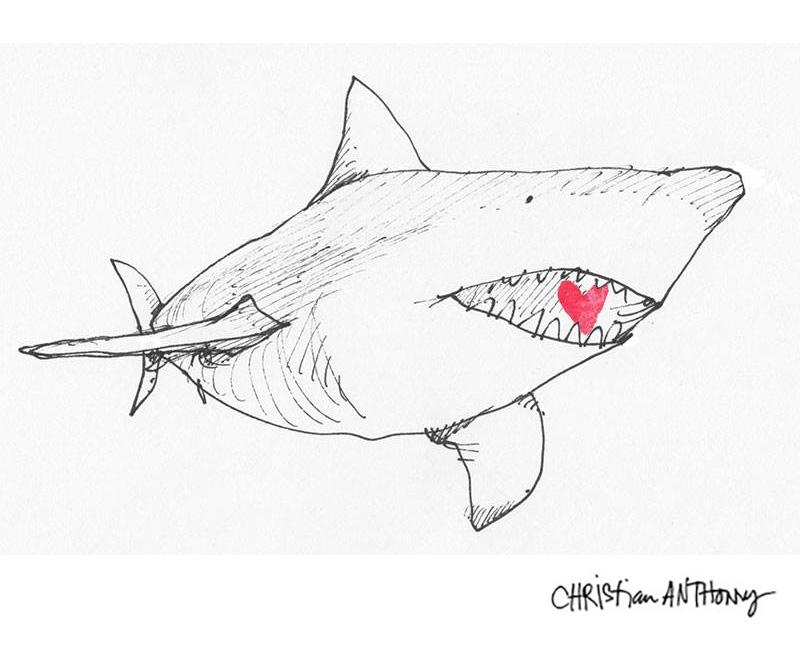 christiananthony-shark